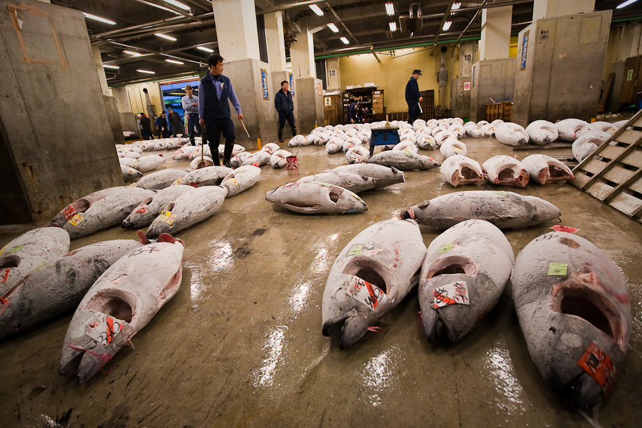 Tsukiji tuna on auction floor